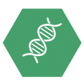 Pathologie / Zytologie